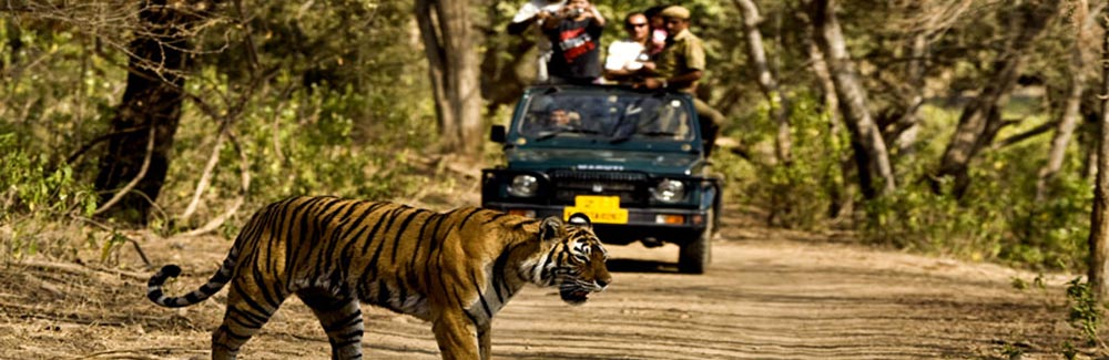 Corbett Wildlife Tour