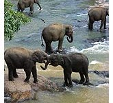 Elephant Safari In Corbett Park