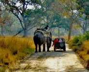 Elephant Safari India