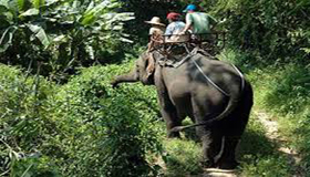 Elephant Safari Tour India