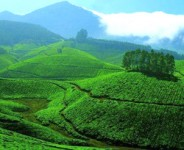 Kerala Spices & Plantation Tour