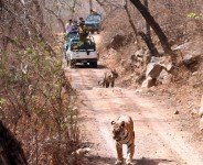 10 Days Rajasthan Wildlife Sanctuary
