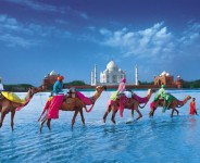 Taj Mahal Tours with Camel Safari